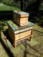 Bienenklasse